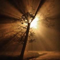 drzewo rosłe jak ty dziś