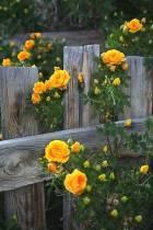 kwiaty nie płaczą