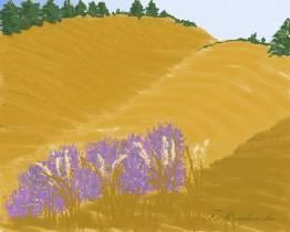 sierpniowe krajobrazy
