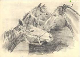 Konie, moja miłość...